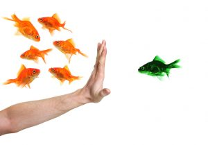 inequality fish picture; glass ceiling discriimination